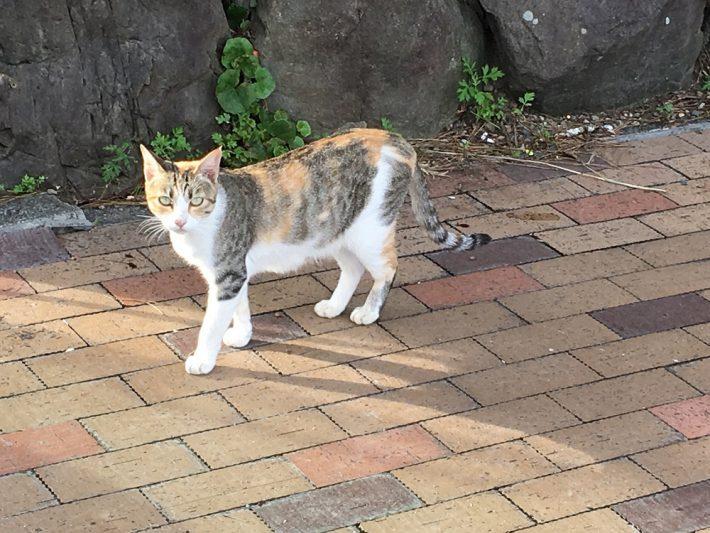 中土佐町猫
